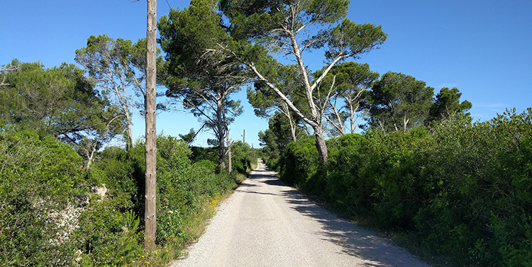 Hardlopen Menorca